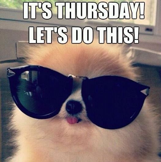 Happy Thursday Images With Dogs Have a great day  Maxx